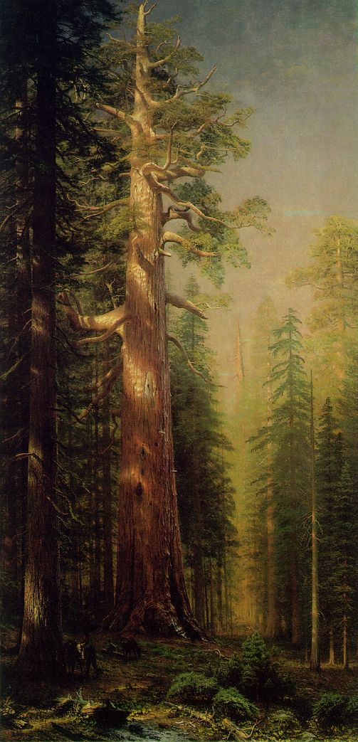 The Great Trees Mariposa Grove California 1876   Albert Bierstadt   Oil Painting
