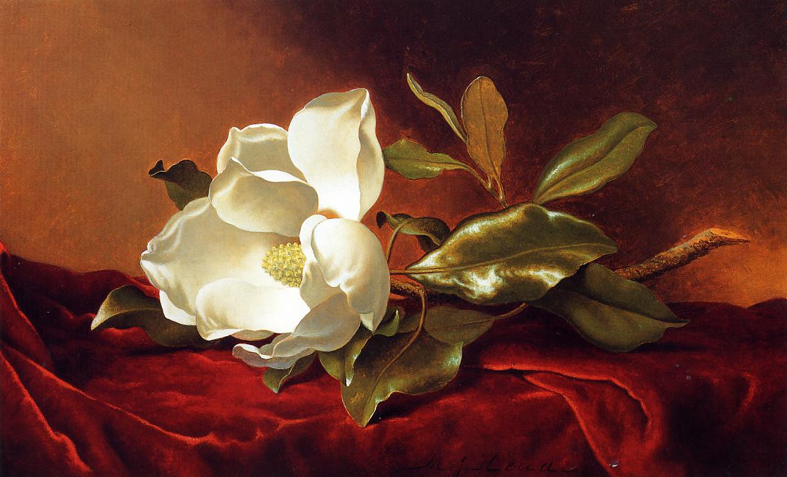 A Magnolia on Red Velvet 1885-1895 | Martin Johnson Heade | Oil Painting