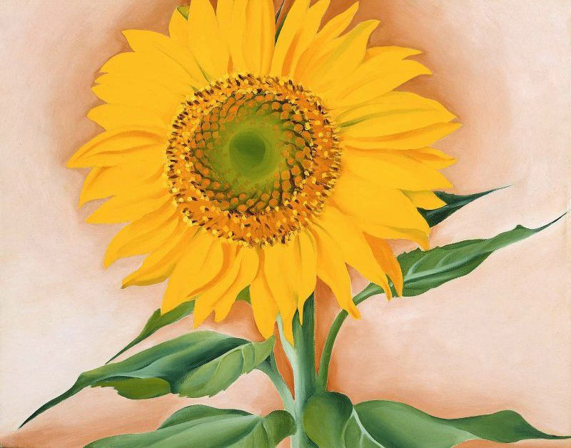 A Sunflower from Maggie 1937   Georgia O Keeffe   oil painting