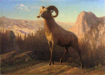 A Rocky Mountain Sheep Ovis Montana | Albert Bierstadt | oil painting