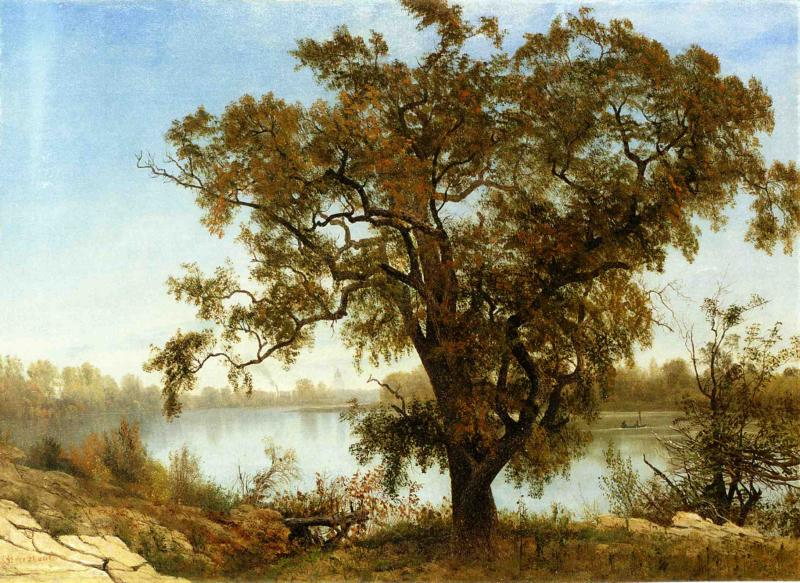 A View from Sacramento | Albert Bierstadt | oil painting