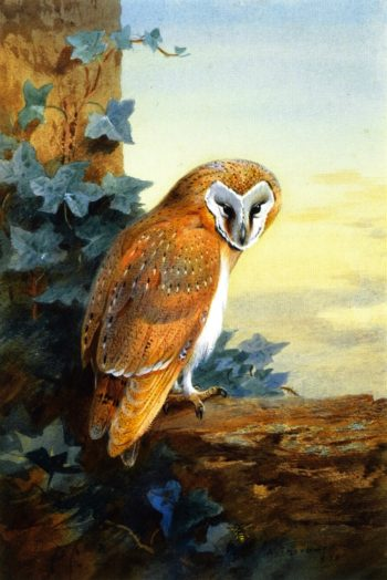 Archibald Thorburn Oil Paintings Amp Art Reproductions For Sale