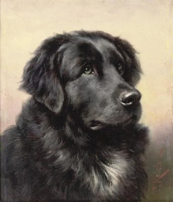 Newfoundland 1 | Carl Reichert | oil painting