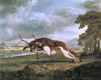Greyhound Attacking a Stag   George Stubbs   oil painting