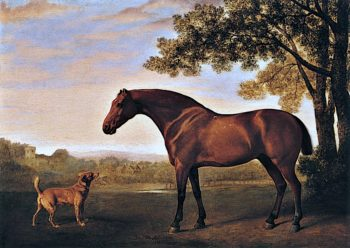 A Red Hunter and a Dog Called Trim