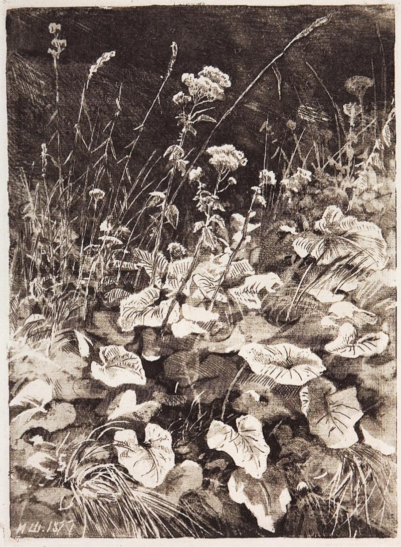 White Flowers Painting Ivan Ivanovich Shishkin Oil Paintings