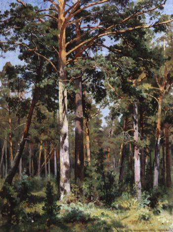 Forest in Sestroretsk   Ivan Ivanovich Shishkin   Oil Painting