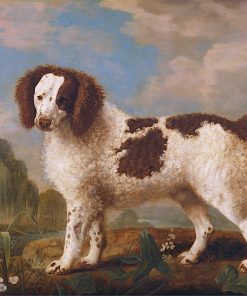 Brown and White Norfolk or Water Spaniel   George Stubbs   Oil Painting